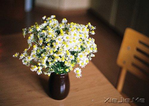 晚安心语:每一段青春都会苍老,但我希望记忆里的你一直都好 (5)